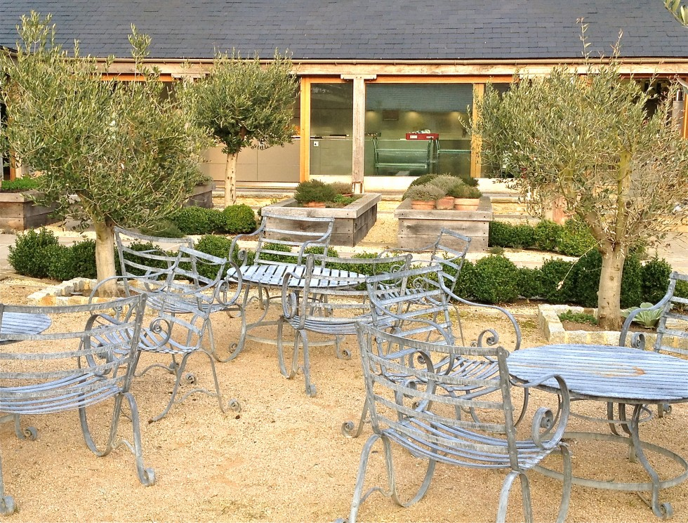 Outside the kitchen amongst olive trees and lavender
